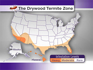 Termite Infestation Map